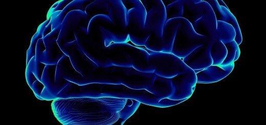 Человеческий мозг в 3D